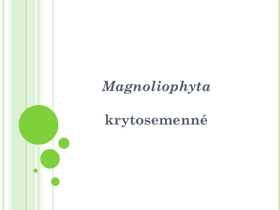 Magnoliophyta krytosemenné