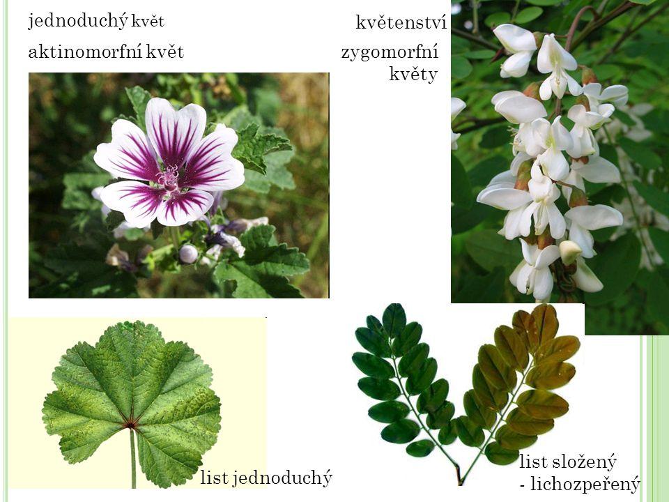 jednoduchý květ květenství. aktinomorfní květ. zygomorfní. květy. list složený. - lichozpeřený.