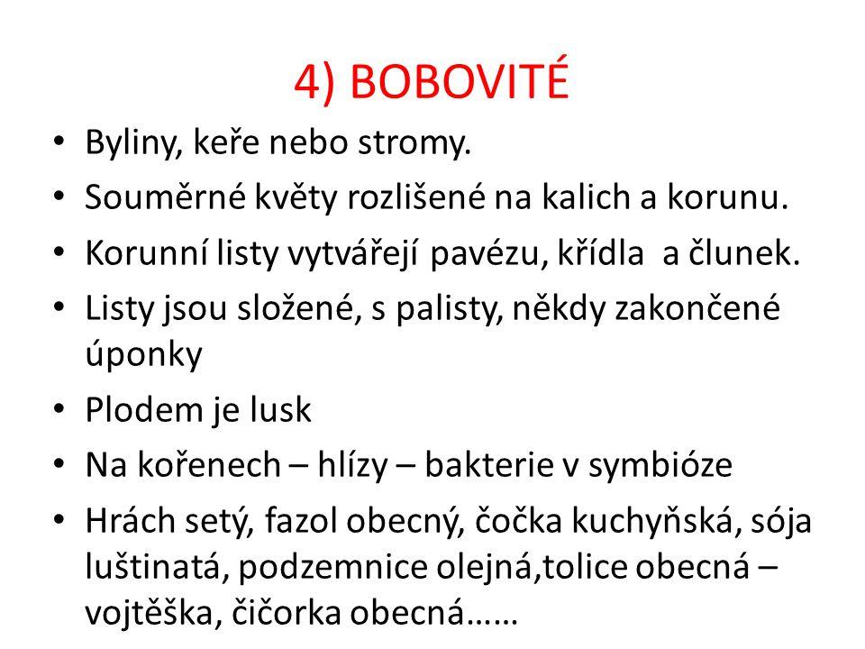 4) BOBOVITÉ Byliny, keře nebo stromy.