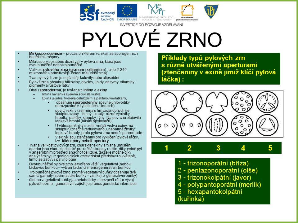 PYLOVÉ ZRNO 1 2 3 4 5 Příklady typů pylových zrn