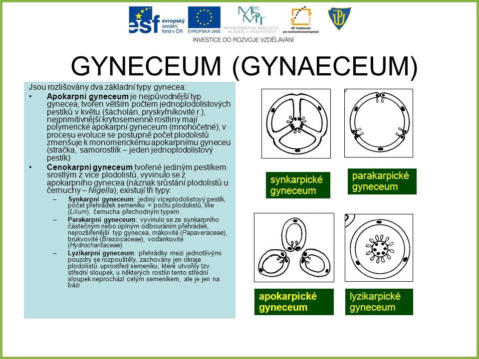 GYNECEUM (GYNAECEUM) parakarpické gyneceum synkarpické gyneceum