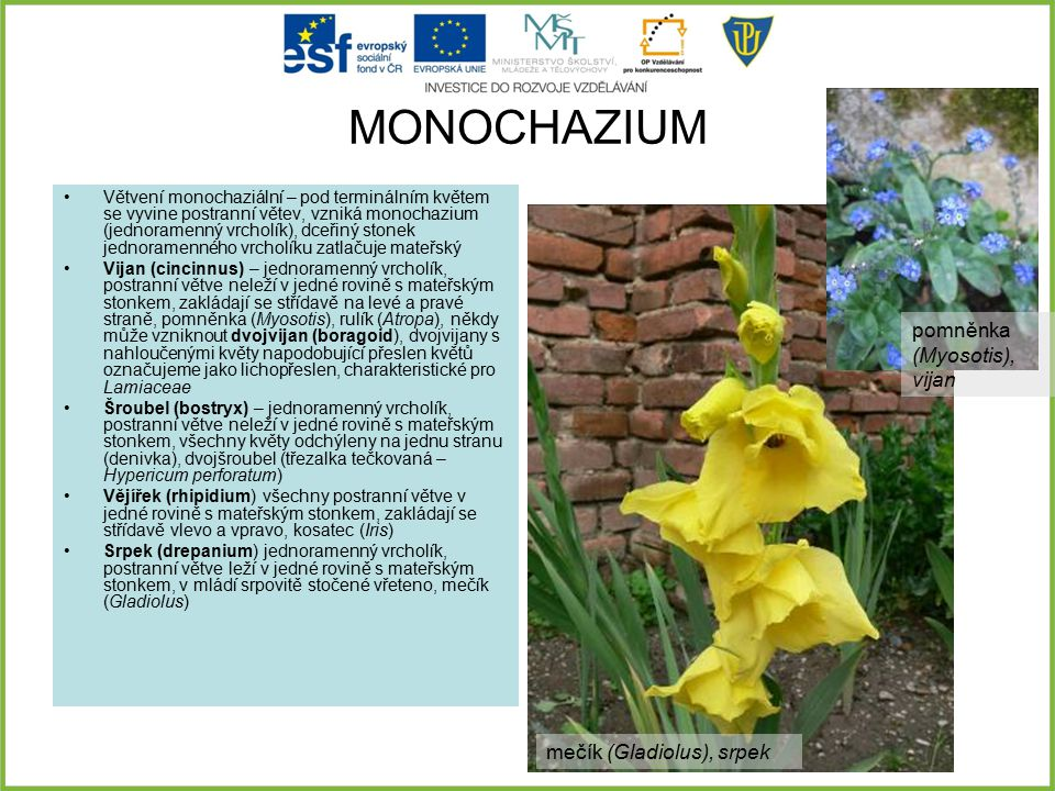 MONOCHAZIUM pomněnka (Myosotis), vijan mečík (Gladiolus), srpek