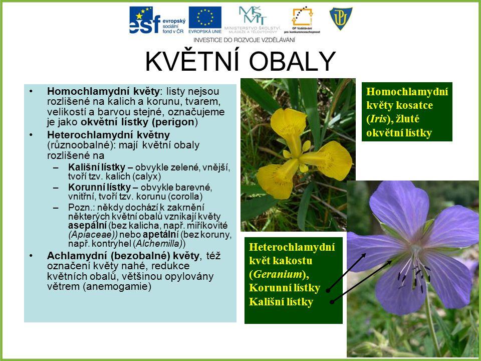 KVĚTNÍ OBALY Homochlamydní květy kosatce (Iris), žluté okvětní lístky