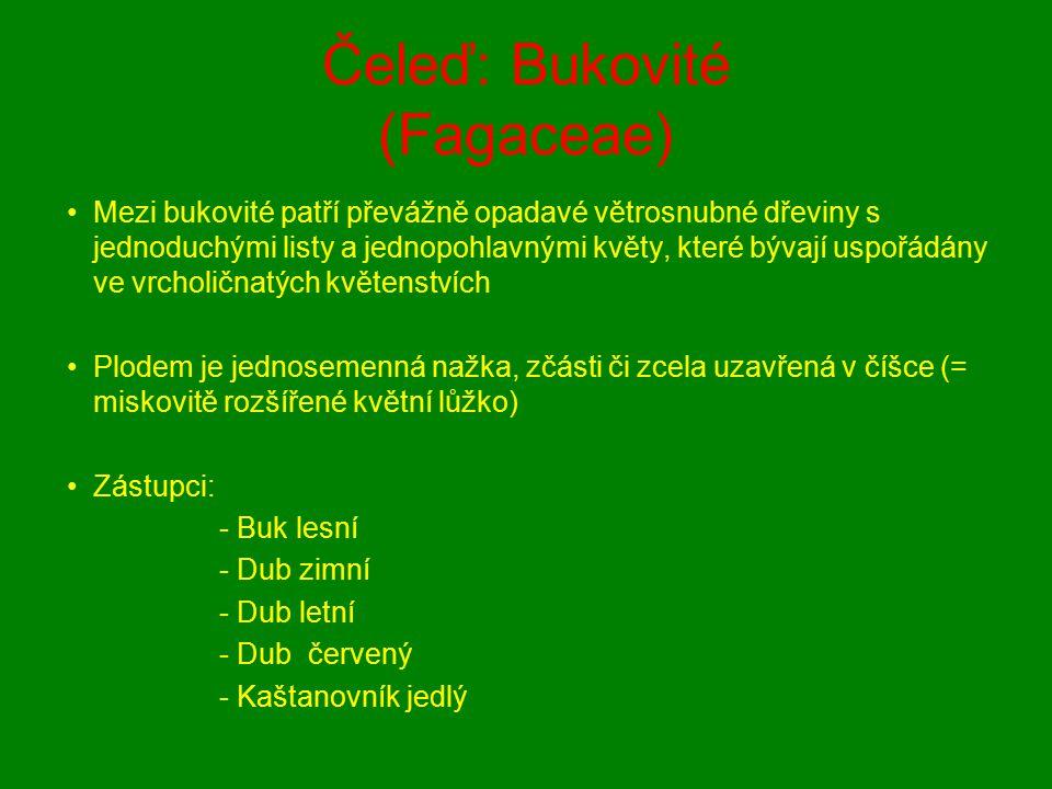 Čeleď: Bukovité (Fagaceae)