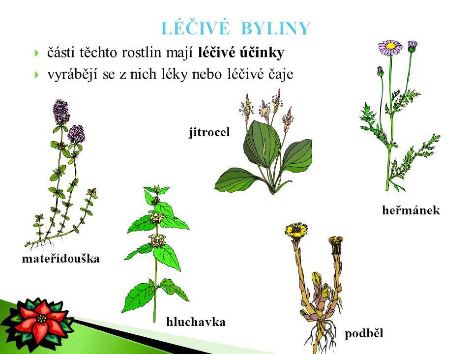 LÉČIVÉ BYLINY části těchto rostlin mají léčivé účinky