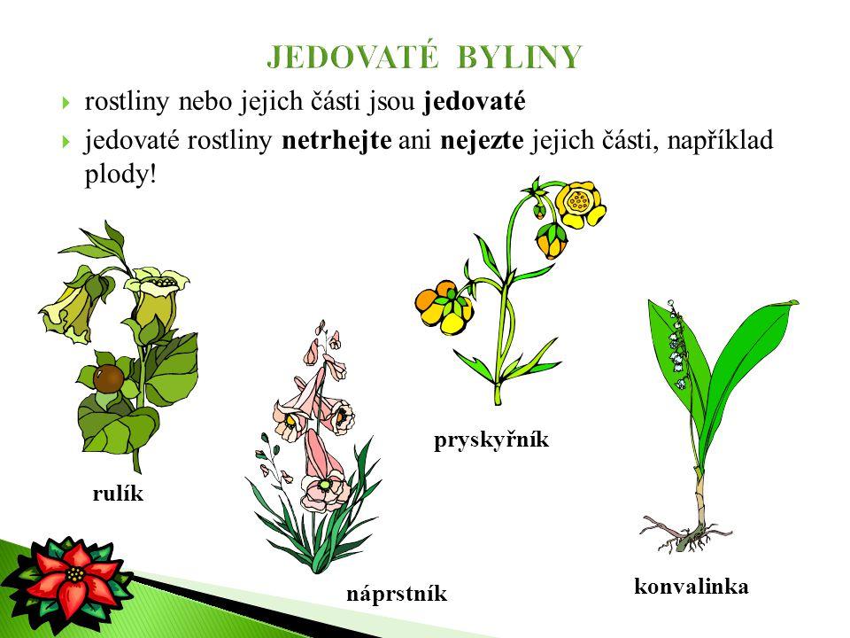 JEDOVATÉ BYLINY rostliny nebo jejich části jsou jedovaté