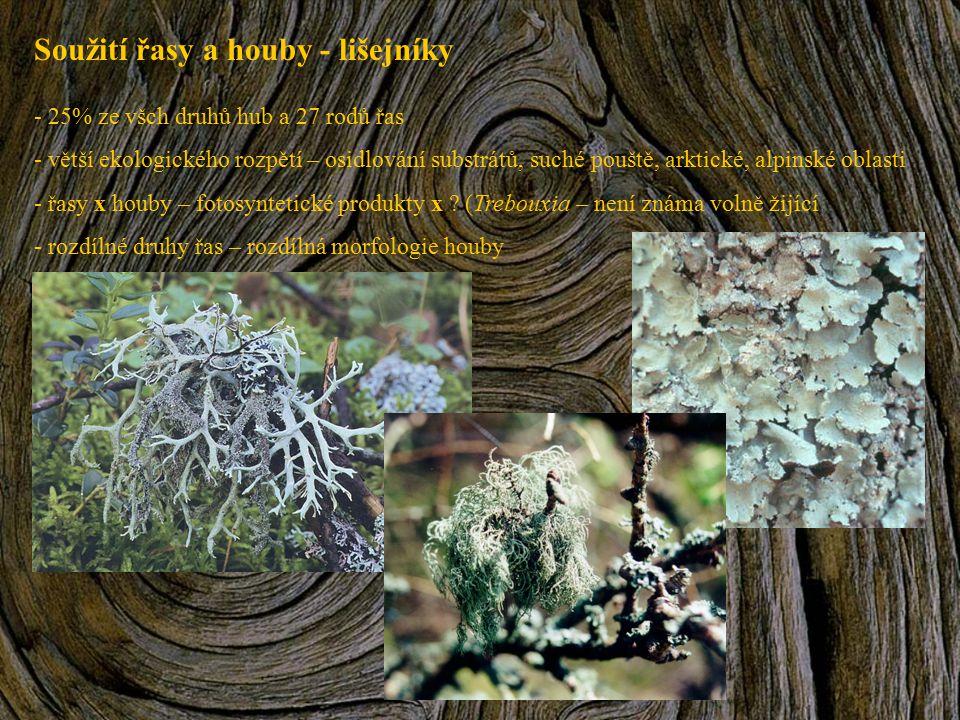 Soužití řasy a houby - lišejníky