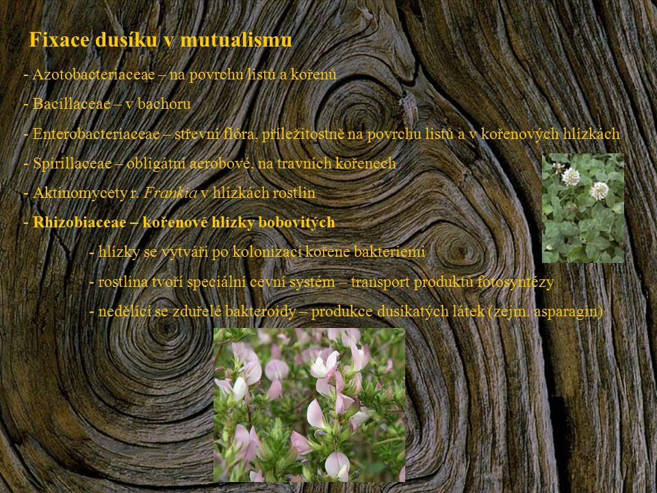 Fixace dusíku v mutualismu