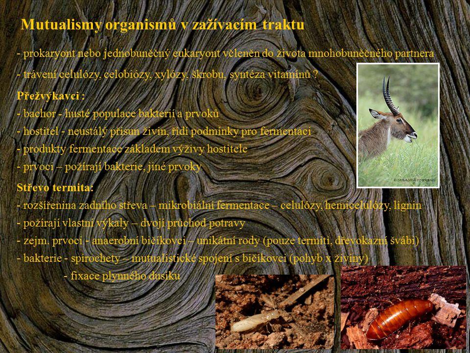 Mutualismy organismů v zažívacím traktu