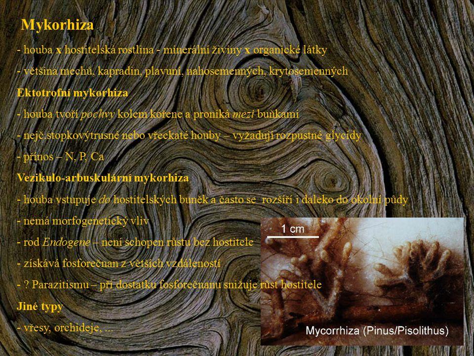 Mykorhiza houba x hostitelská rostlina - minerální živiny x organické látky. většina mechů, kapradin, plavuní, nahosemenných, krytosemenných.