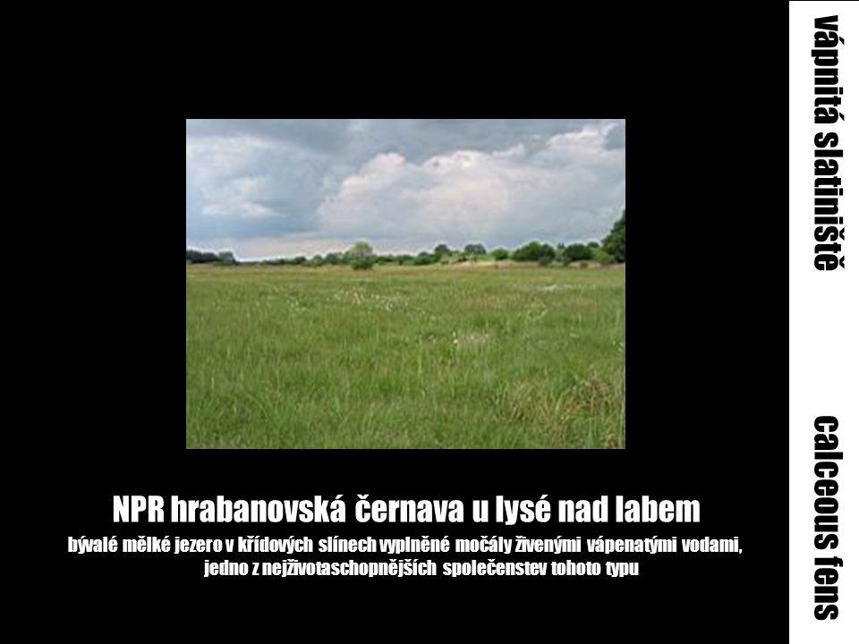 NPR hrabanovská černava u lysé nad labem