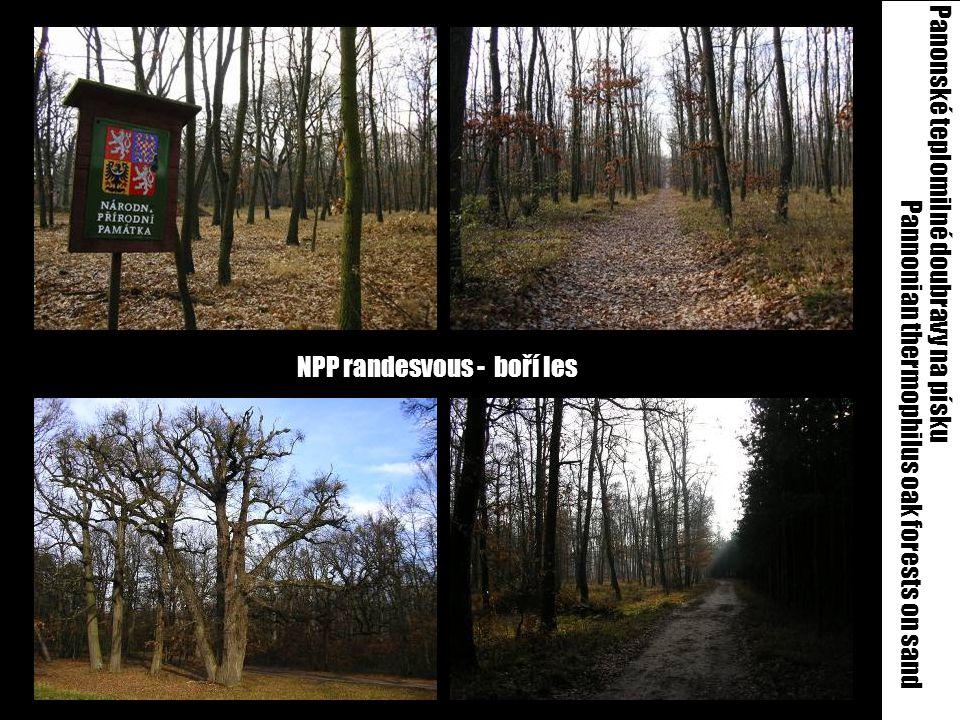 NPP randesvous - boří les