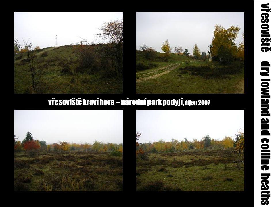 vřesoviště kraví hora – národní park podyjí, říjen 2007