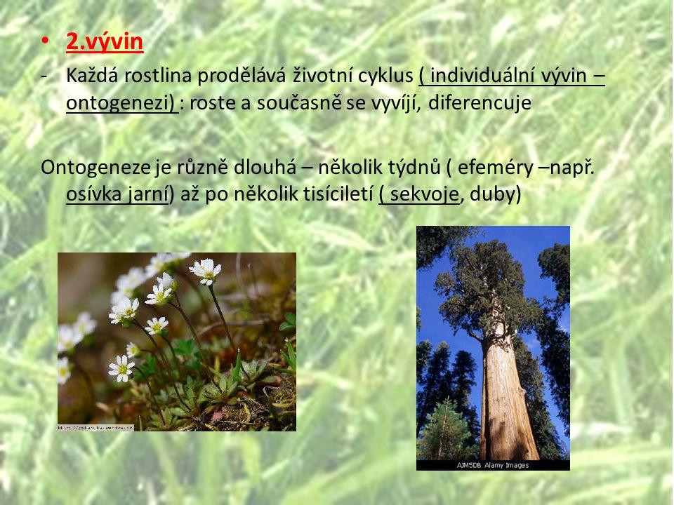 2.vývin Každá rostlina prodělává životní cyklus ( individuální vývin – ontogenezi) : roste a současně se vyvíjí, diferencuje.