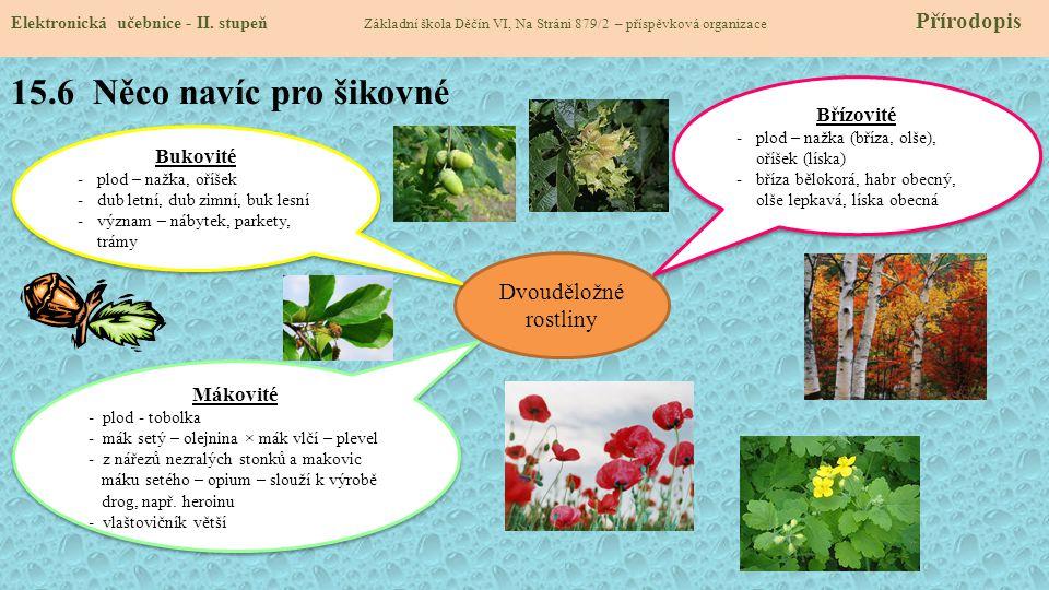 15.6 Něco navíc pro šikovné Dvouděložné rostliny Břízovité Bukovité