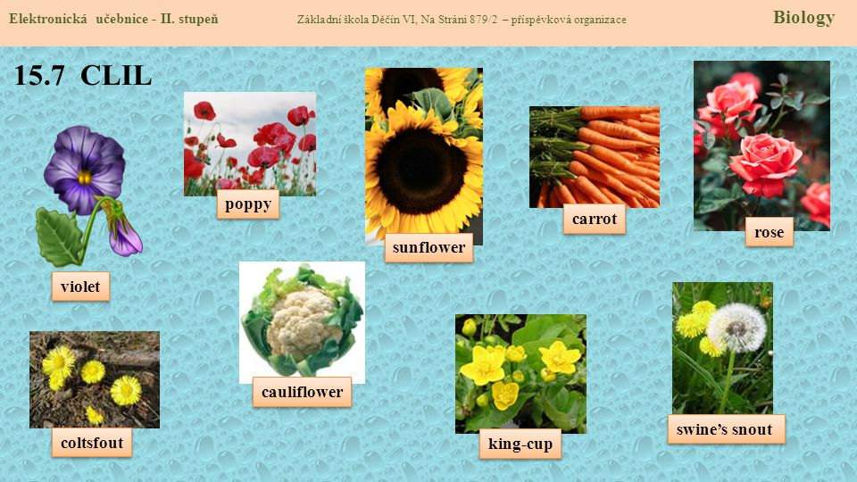 15.7 CLIL poppy carrot rose sunflower violet cauliflower swine's snout