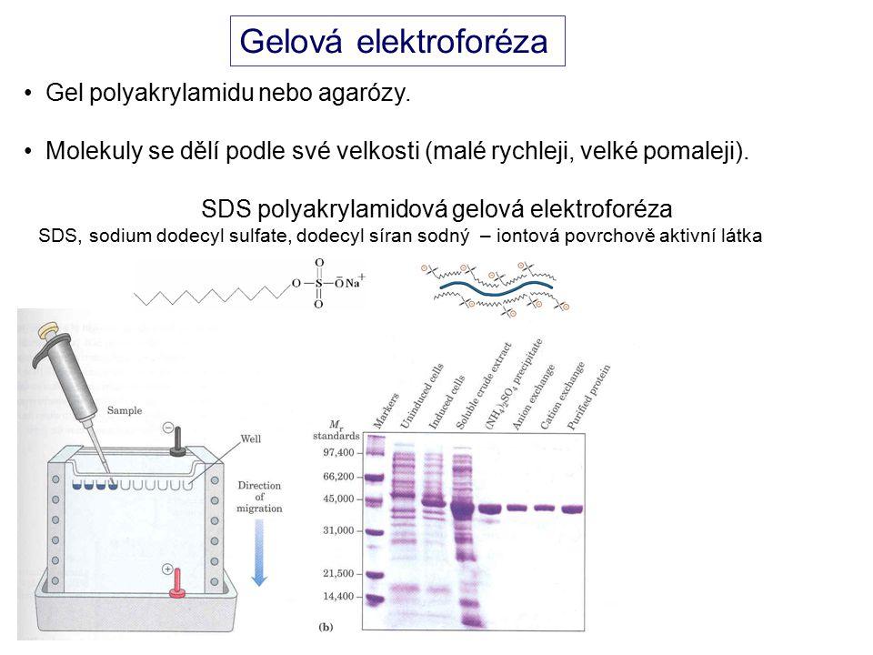 SDS polyakrylamidová gelová elektroforéza