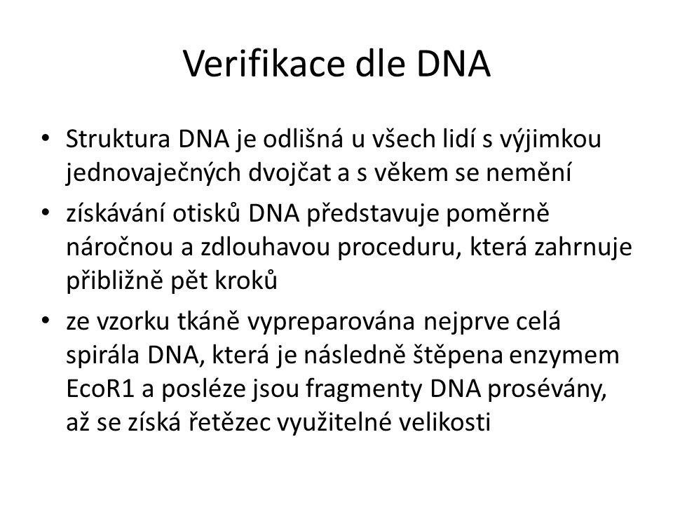 Verifikace dle DNA Struktura DNA je odlišná u všech lidí s výjimkou jednovaječných dvojčat a s věkem se nemění.