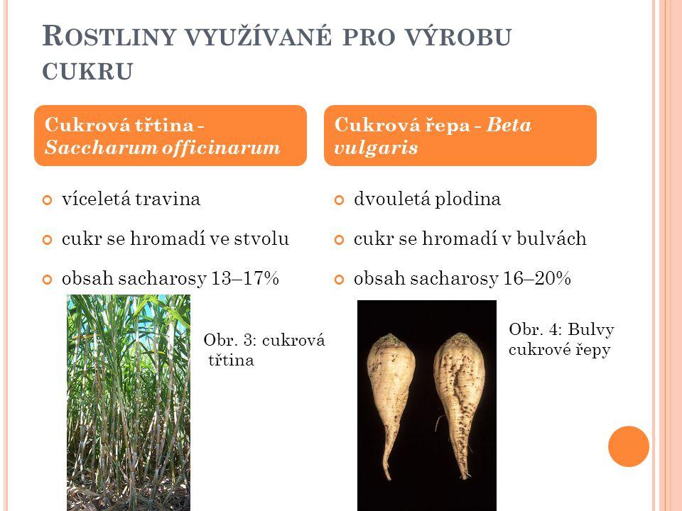 Rostliny využívané pro výrobu cukru