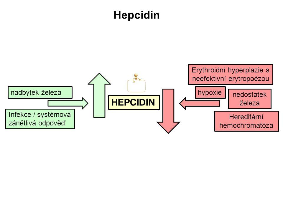 Hepcidin HEPCIDIN Erythroidní hyperplazie s neefektivní erytropoézou