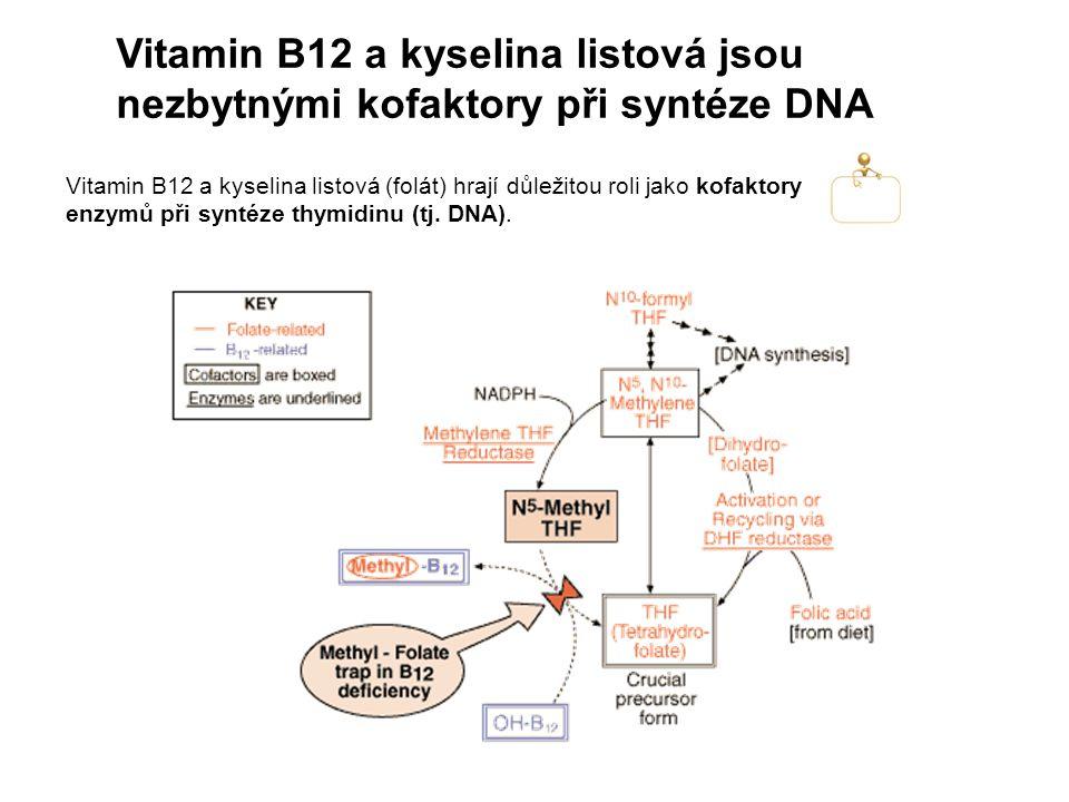 Vitamin B12 a kyselina listová jsou nezbytnými kofaktory při syntéze DNA