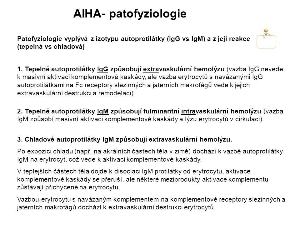 AIHA- patofyziologie Patofyziologie vyplývá z izotypu autoprotilátky (IgG vs IgM) a z její reakce (tepelná vs chladová)