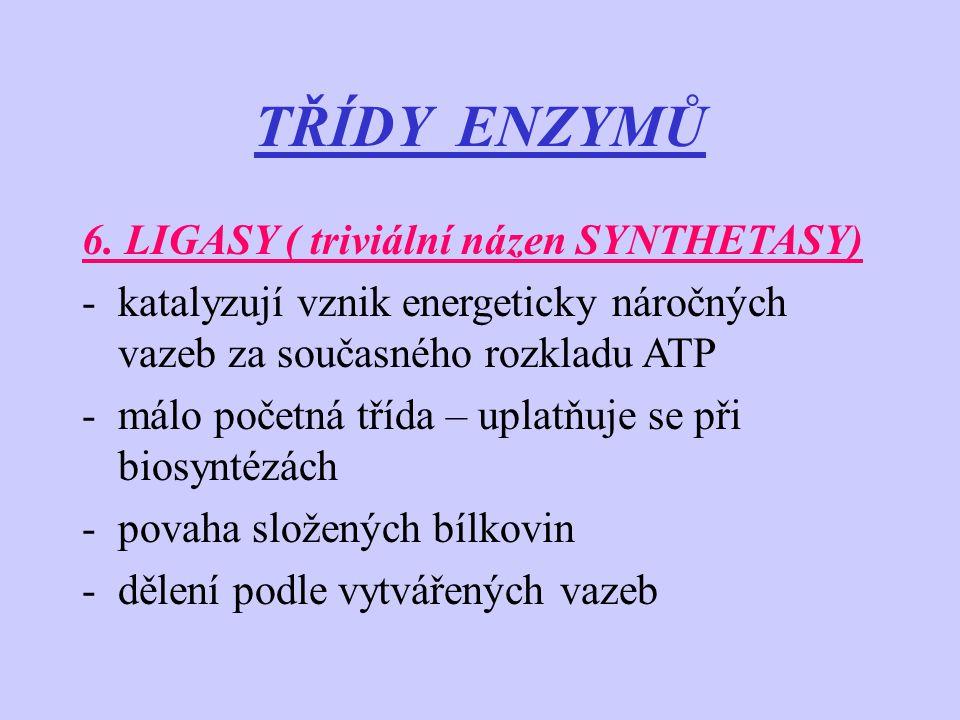 TŘÍDY ENZYMŮ 6. LIGASY ( triviální názen SYNTHETASY)
