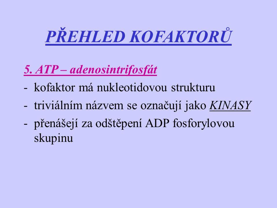 PŘEHLED KOFAKTORŮ 5. ATP – adenosintrifosfát