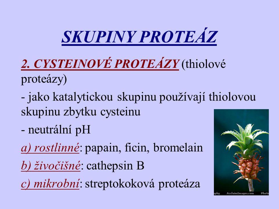 SKUPINY PROTEÁZ 2. CYSTEINOVÉ PROTEÁZY (thiolové proteázy)