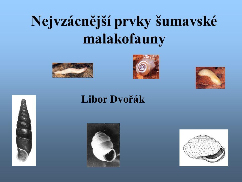 Nejvzácnější prvky šumavské malakofauny