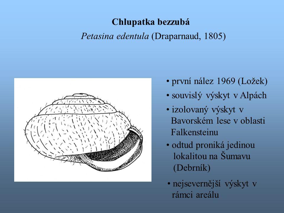 Chlupatka bezzubá Petasina edentula (Draparnaud, 1805) první nález 1969 (Ložek) souvislý výskyt v Alpách.