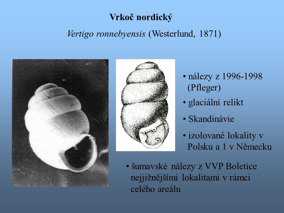 Vrkoč nordický Vertigo ronnebyensis (Westerlund, 1871) nálezy z 1996-1998. (Pfleger) glaciální relikt.