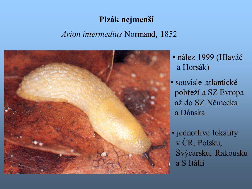 Plzák nejmenší Arion intermedius Normand, 1852. nález 1999 (Hlaváč. a Horsák) souvisle atlantické.