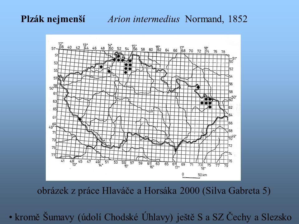 Plzák nejmenší Arion intermedius Normand, 1852. obrázek z práce Hlaváče a Horsáka 2000 (Silva Gabreta 5)