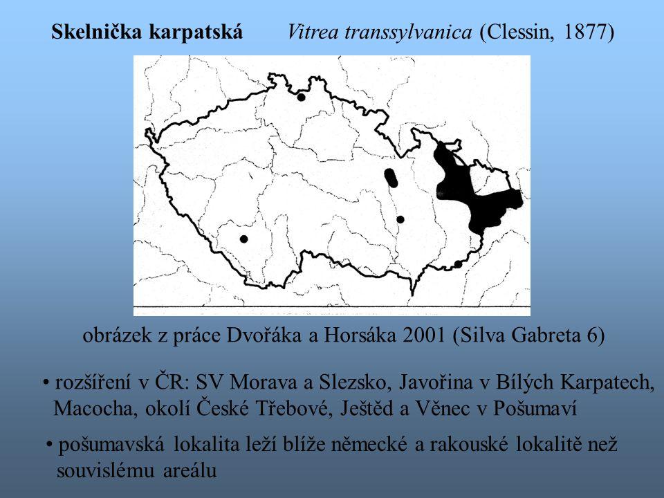 Skelnička karpatská Vitrea transsylvanica (Clessin, 1877) obrázek z práce Dvořáka a Horsáka 2001 (Silva Gabreta 6)