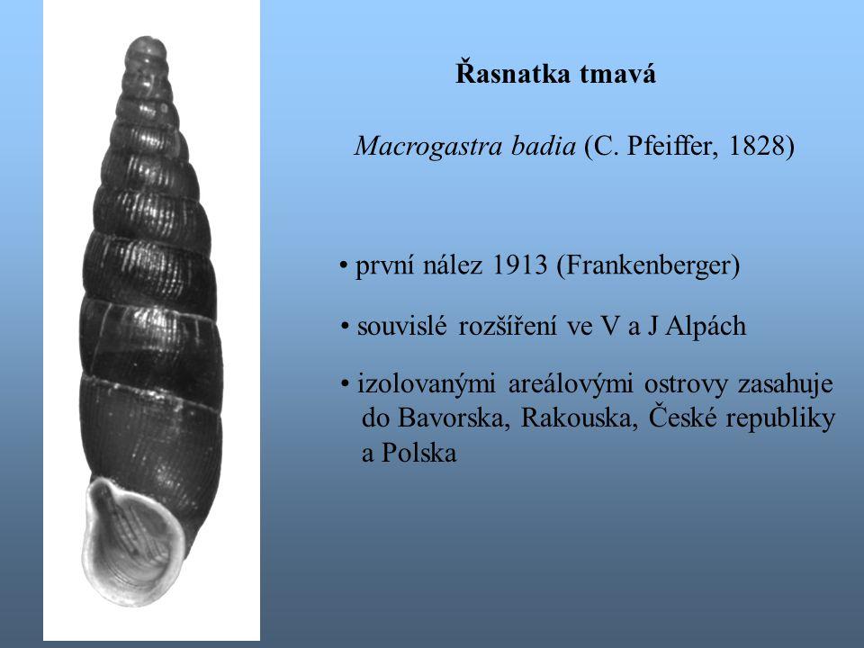 Řasnatka tmavá Macrogastra badia (C. Pfeiffer, 1828) první nález 1913 (Frankenberger) souvislé rozšíření ve V a J Alpách.