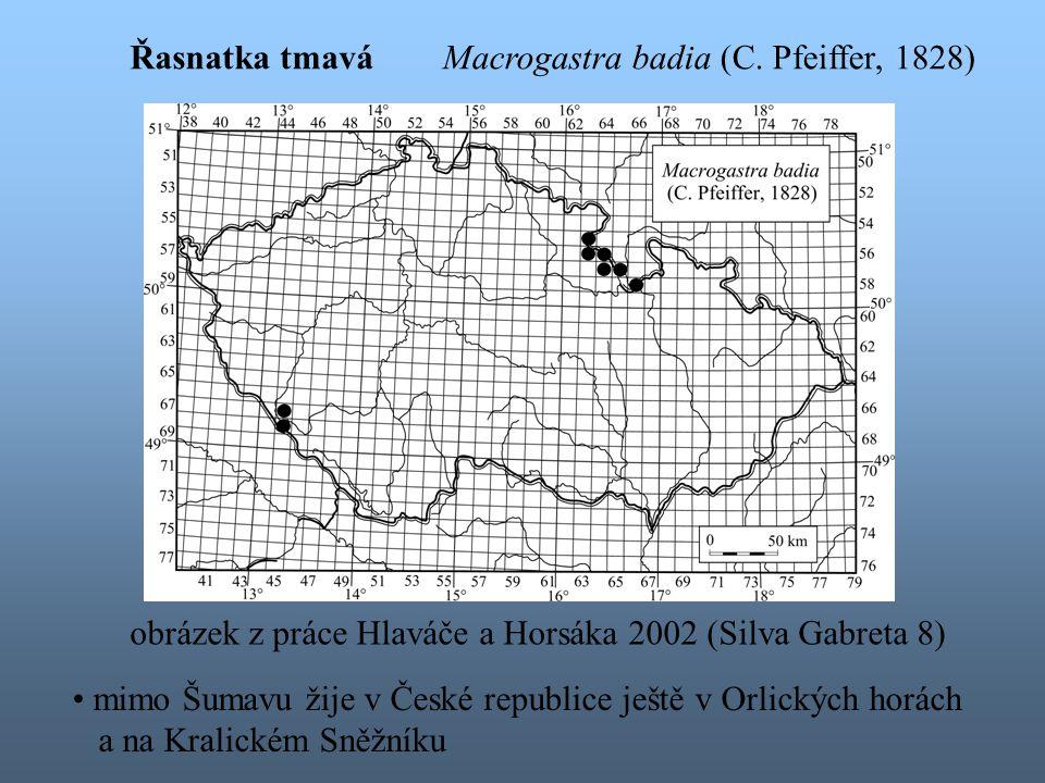 Řasnatka tmavá Macrogastra badia (C. Pfeiffer, 1828) obrázek z práce Hlaváče a Horsáka 2002 (Silva Gabreta 8)