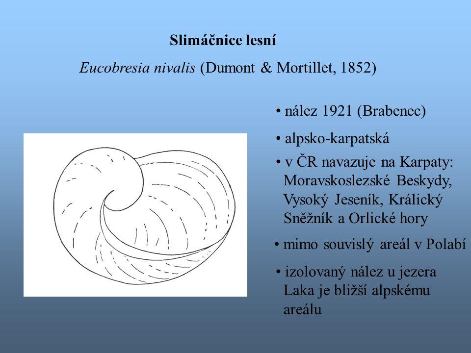 Slimáčnice lesní Eucobresia nivalis (Dumont & Mortillet, 1852) nález 1921 (Brabenec) alpsko-karpatská.