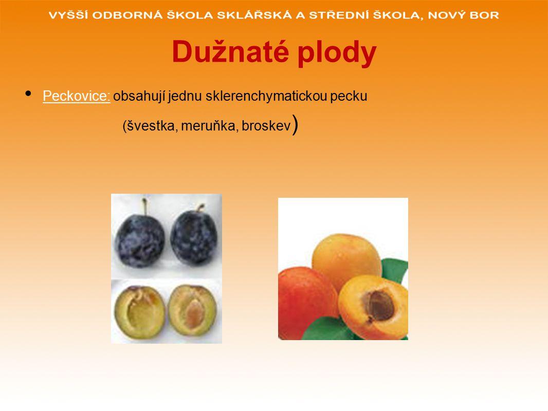 Dužnaté plody Peckovice: obsahují jednu sklerenchymatickou pecku