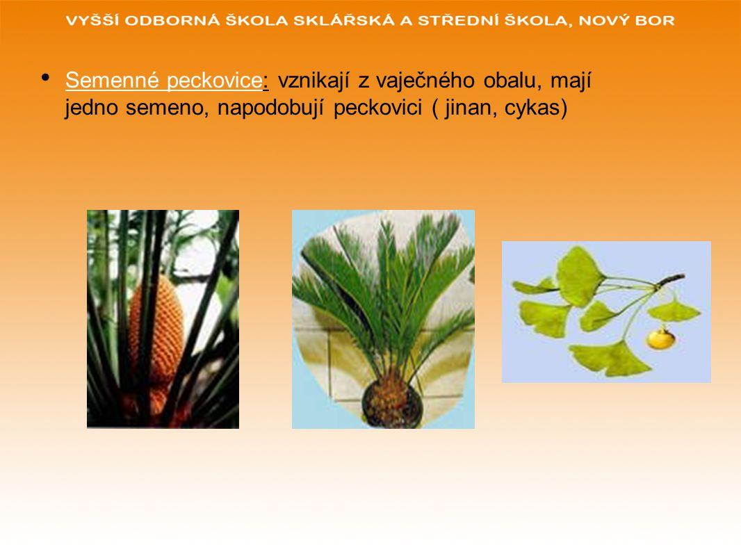 Semenné peckovice: vznikají z vaječného obalu, mají jedno semeno, napodobují peckovici ( jinan, cykas)