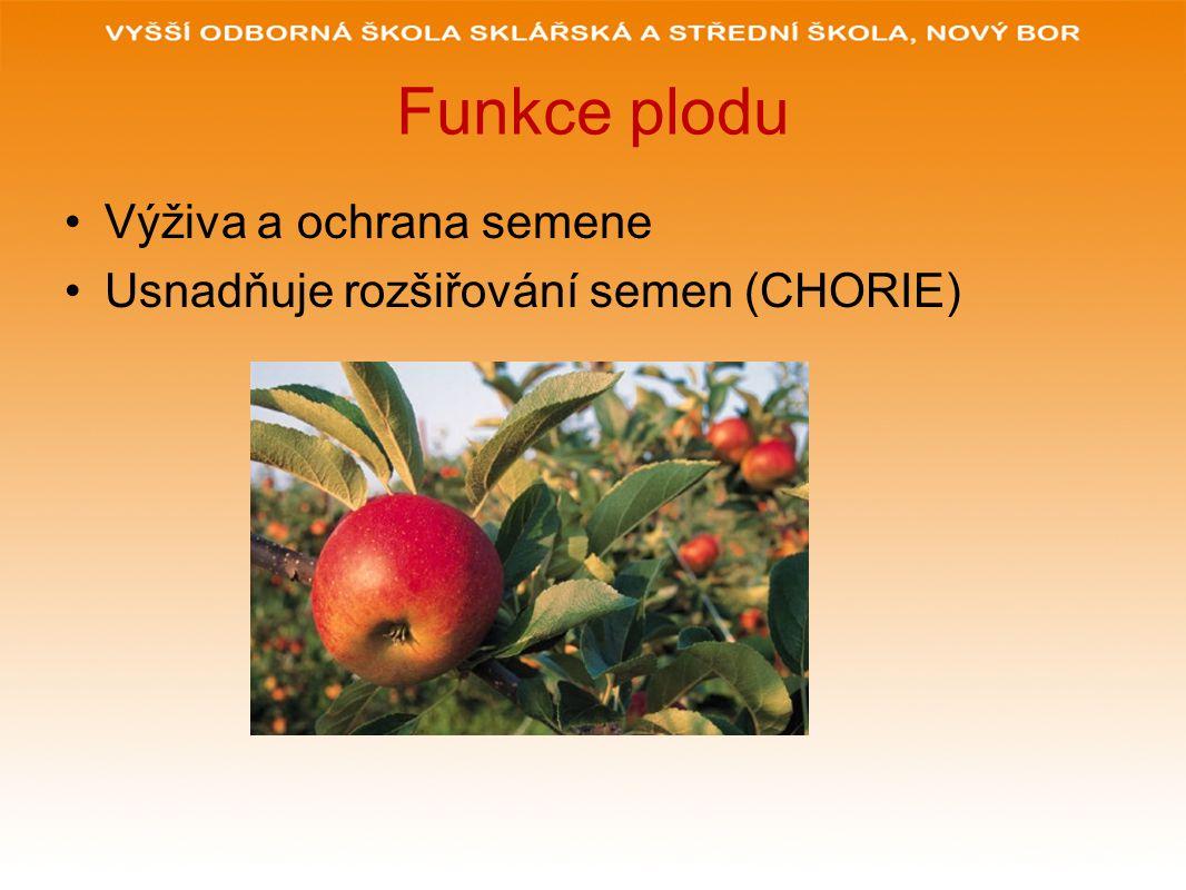 Funkce plodu Výživa a ochrana semene