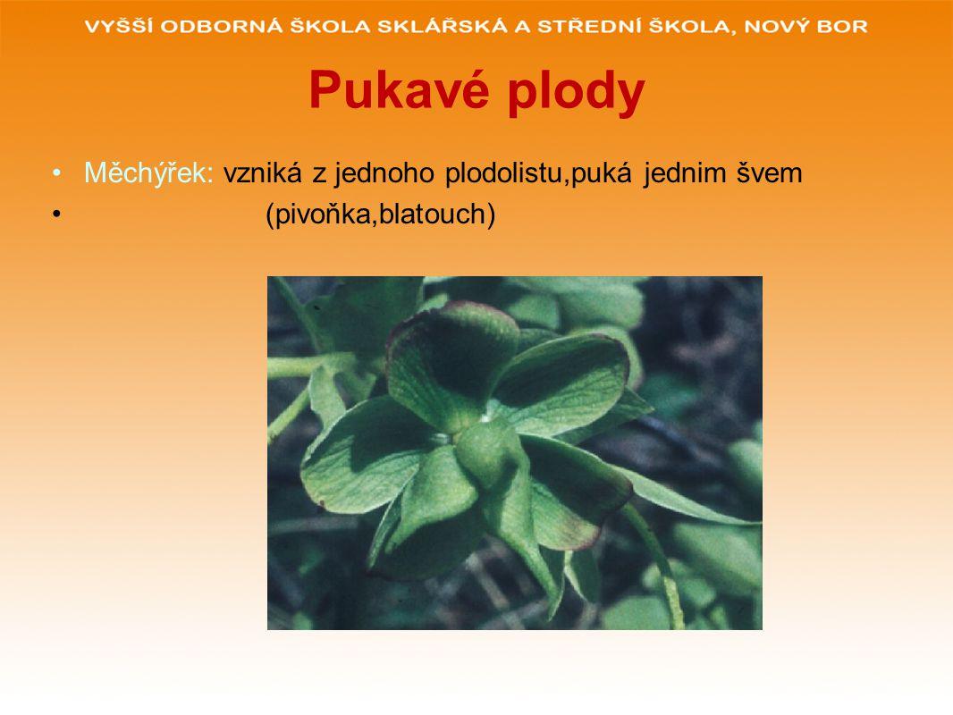 Pukavé plody Měchýřek: vzniká z jednoho plodolistu,puká jednim švem