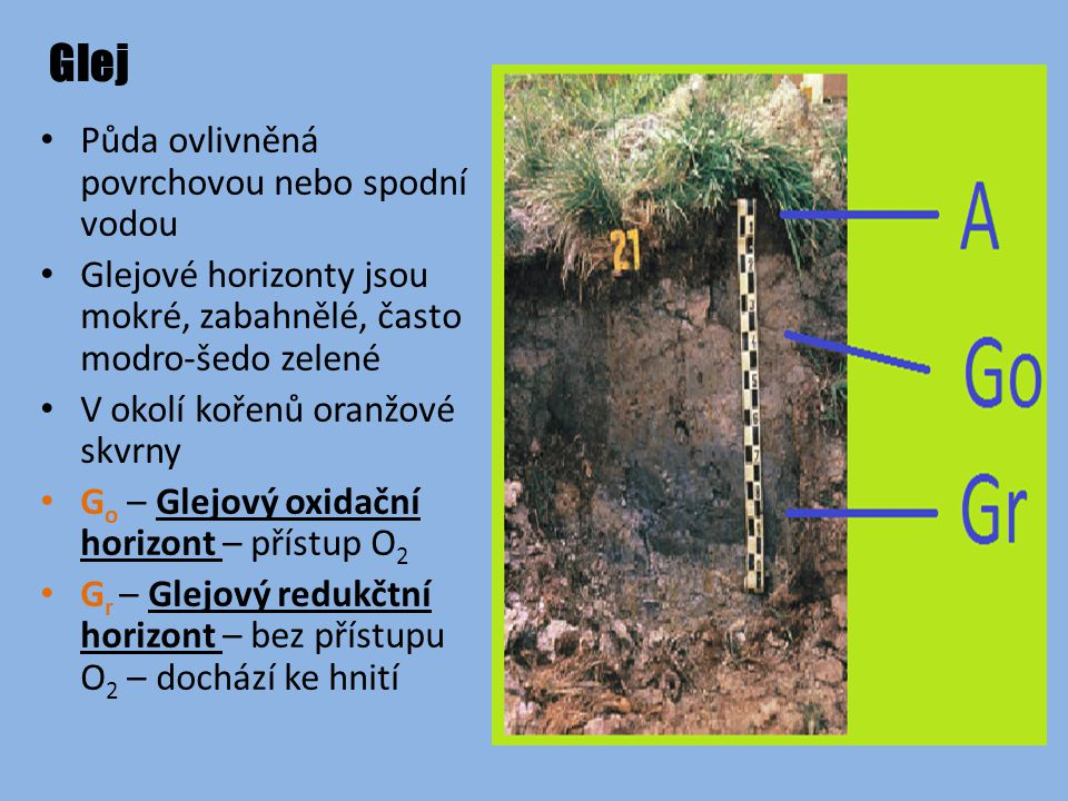 Glej Půda ovlivněná povrchovou nebo spodní vodou
