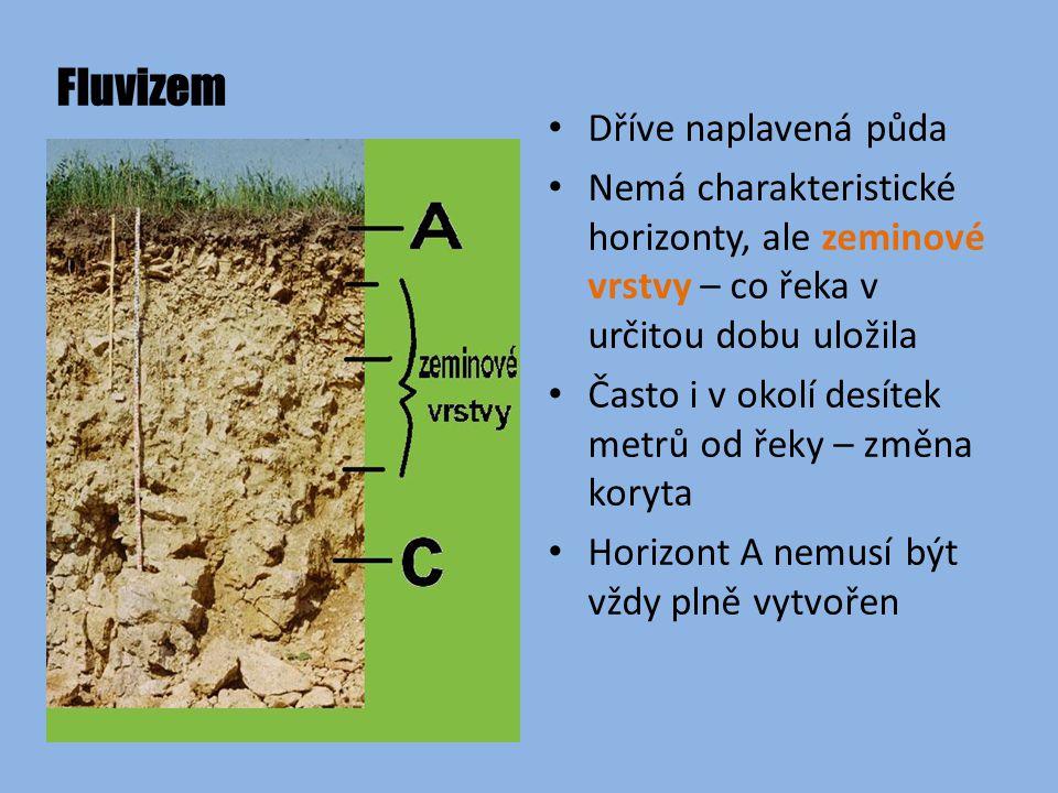 Fluvizem Dříve naplavená půda