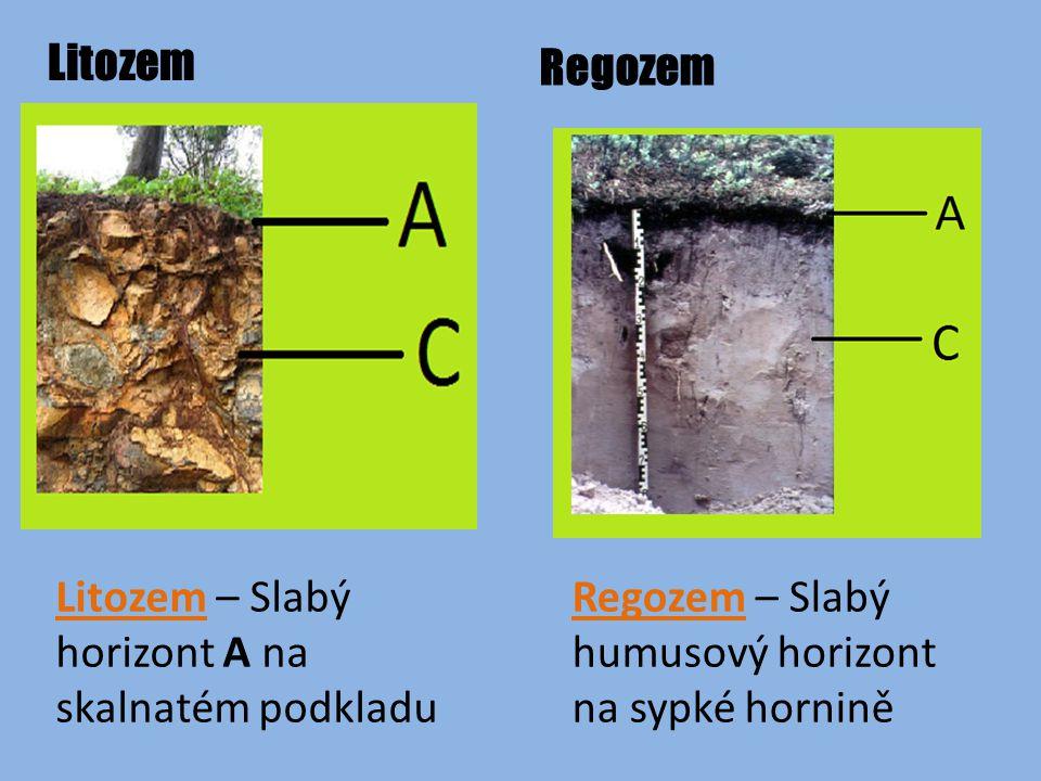 Litozem Regozem. Litozem – Slabý horizont A na skalnatém podkladu.