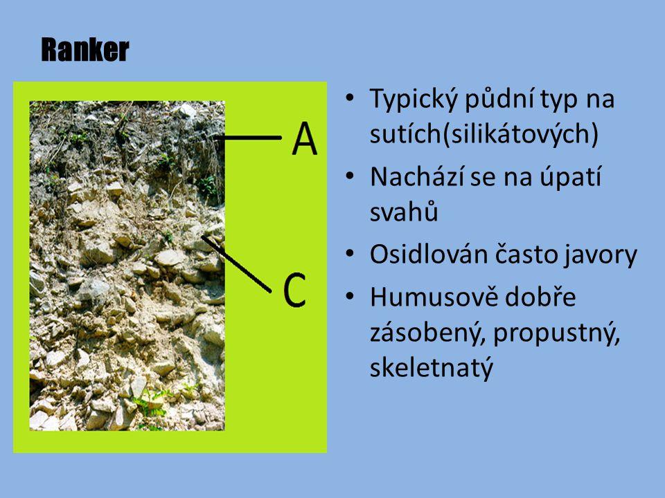 Ranker Typický půdní typ na sutích(silikátových) Nachází se na úpatí svahů. Osidlován často javory.