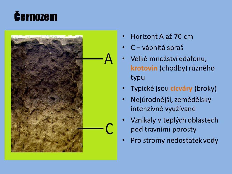 Černozem Horizont A až 70 cm C – vápnitá spraš