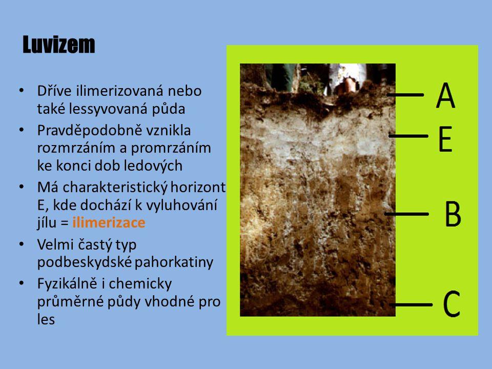 Luvizem Dříve ilimerizovaná nebo také lessyvovaná půda