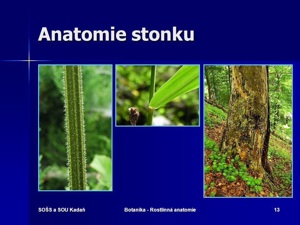 Botanika - Rostlinná anatomie