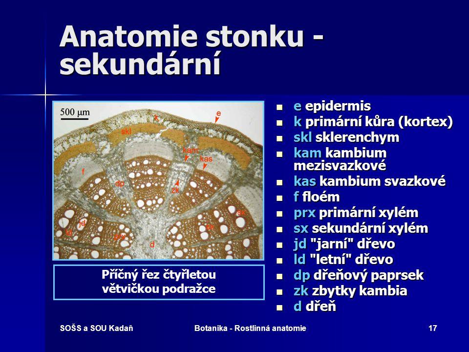 Anatomie stonku - sekundární